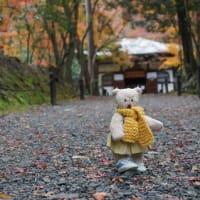モシュ印も8日まで。「そうだ 京都行こう」で訪れた「地蔵院」の紅葉。犬のくうちゃんとも再会