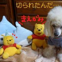 北風だからか…今日は老犬ラスさんとお家でまったり…そして前髪が…(^▽^;)