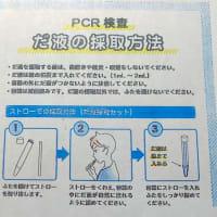 PCR検査するはめに