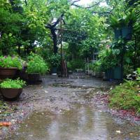 20-08-09 無情の雨