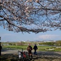 お花見Cycling2019@江戸川