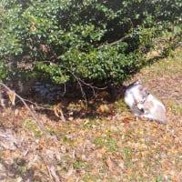 冬猫の昼下がり。