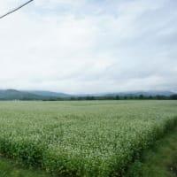 幌加内を覆う白い花畑