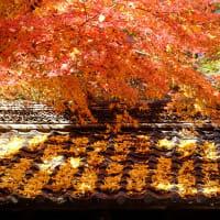 石山寺と瀬田川を軽く散策 (4)