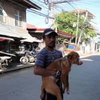 語学留学でセブに行く21 散歩の犬