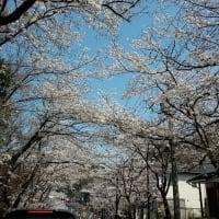 鎌倉・逗子ハイランド  №3