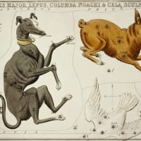 獅子座とシリウス