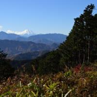 高尾山 4.山頂へ