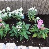 新しい庭作り、花壇編 ③ 🌿🌸🌿 2019年7月8日