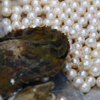 海女桶の中には あこや貝と真珠 (賢島)