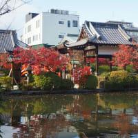 神泉苑最後の紅葉