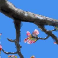 「サクラ」・・・それでも咲くね。