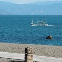 💖桂浜で花散策💖