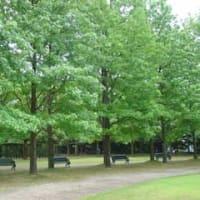 緑の木の下で思うこと