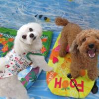 ワンワンフェスタ~愛犬と1日楽しめる屋内イベント~  犬のしつけ教室@アロハドギー