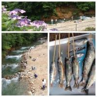 天然アマゴや岩魚