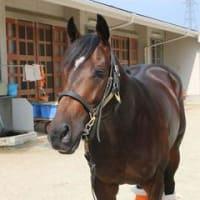 カーフライターク 新馬勝ち!(8/3 小倉5R)