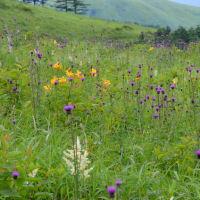 霧ヶ峰の花束の話題と感染防止チェックを受ける。