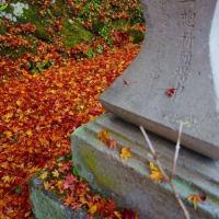 20-11.20blg:金桜神社境内の紅葉その一