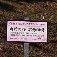 古城山にて一昨年お誕生記念に植樹した「空のベニヤマザクラ」の花芽っこ見てきました!!