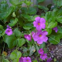 今日の庭 いろいろな花