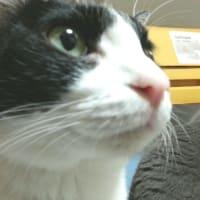 猫のおしっこトラブルについて知ろう!