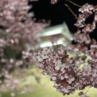 ☆お花見☆