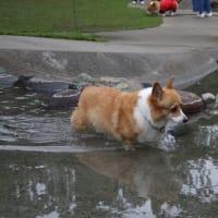 濡れるなら 泳いでしまへ ホトトギス