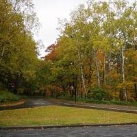 紅葉、見頃へ! Autumn leaves