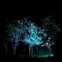 6222 青い森