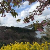 サボりにサボっていた墓参りへ参上、ついでに、梅見、桜見!