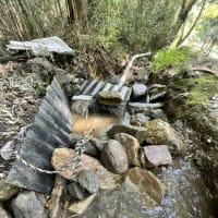水引き作業。
