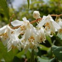 和泉葛城山(関百)☆初夏の花探しの山歩き