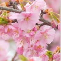 いま国会では・・・「梅に鶯」ではなく・・・「桜に鶯」・・・