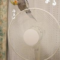 処暑(8月23日)