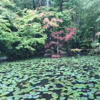 名庭、「天授庵」の妙味なる風景。【南禅寺Ⅲ】