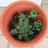 10月の多肉植物の鉢:Myガーデン A・B・D・E