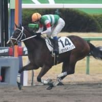 今週の結果 < ヴァルキュリア 新馬勝ち!>