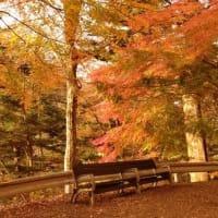~大正浪漫街道~ こんなベンチで一休みしたい