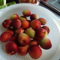 パープルキングという梅でシロップとジャム作り、なつかしのコーヒーゼリー。