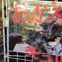 キュッキュに会いに天王寺動物園に行きました。