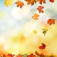 《秋分特別企画》天界の扉を開き、豊穣を享受する!!エンジェルハートヒーリング 【遠隔グループセッション】 お申込み受付中!