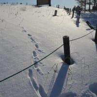 アオサギが庭に降り、キツネが雪原に足跡を残す。ここはどこだ。
