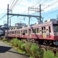 静岡鉄道はコスモスと1000形(2019年10月 恒例の音羽町-日吉町)