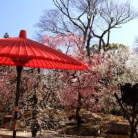 早春・京の街歩きⅢ