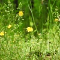 植物は肥料を必要としない!(自然の栽培が自然)