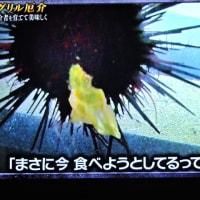 6/24 Dash ウニが漁師の嫌われものだったとは!!