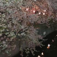 '19 横浜遠征2日目⑤大岡川の夜桜