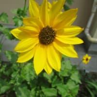 午前の用事と花の出会い