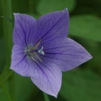 武蔵野ゾーンにて~神代植物公園・植物多様性センター~